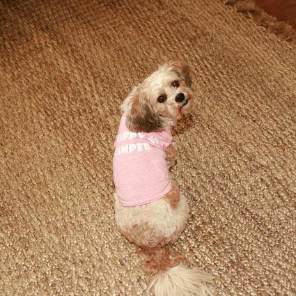 Happy Camper Pet Tee Shirt, Pink, Small