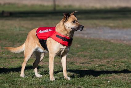 Canine Flotation Device - Small