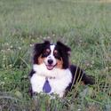 Spectra Shield Flea Tick Medallion, Medium